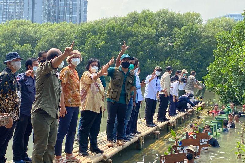 Pemerintah akan lakukan akselerasi rehabilitasi mangrove thumbnail