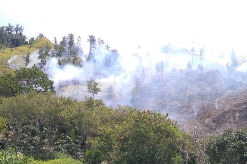 Hutan lindung seluas 19,5 hektare terbakar di Aceh Tengah thumbnail