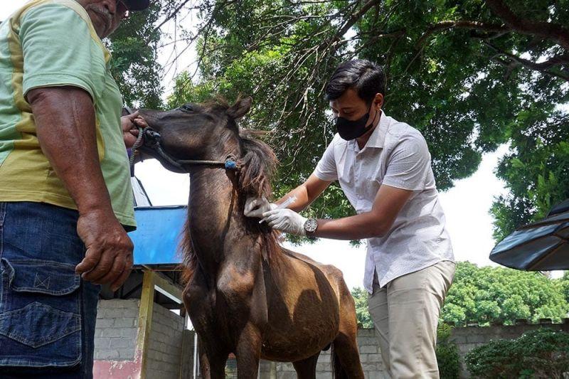 Pemkot Kediri periksa hewan di kebun binatang mini Paggora thumbnail
