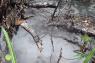 LIPI  Ambon akan tinjau lokasi semburan air panas dampak gempa di Desa Oma