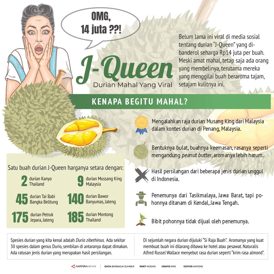 J-Queen, durian mahal yang viral