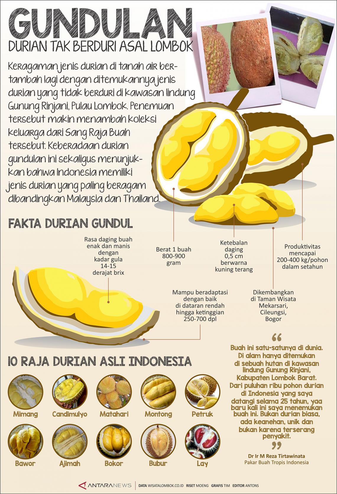 Gundulan Durian tak Berduri Asal Lombok