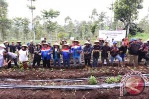 'Disuntik' program kemitraan Pertamina, petani Garut panen raya kentang