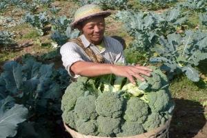 Brokoli, bayam dan semangka bisa gantikan susu