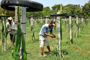 Presiden perintahkan PTPN siapkan sedikitnya 10.000 ha untuk buah