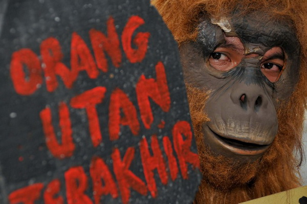 Seventy pct of primates in Indonesia on brink of extinction