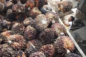 Indonesia ingin ekspor langsung CPO ke Rusia