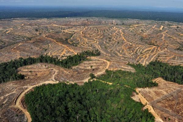 Banjir di Polman Akibat Pembalakan Hutan Perusahaan Besar