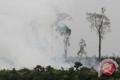 Kebakaran lahan kembali terjadi di Palangka Raya