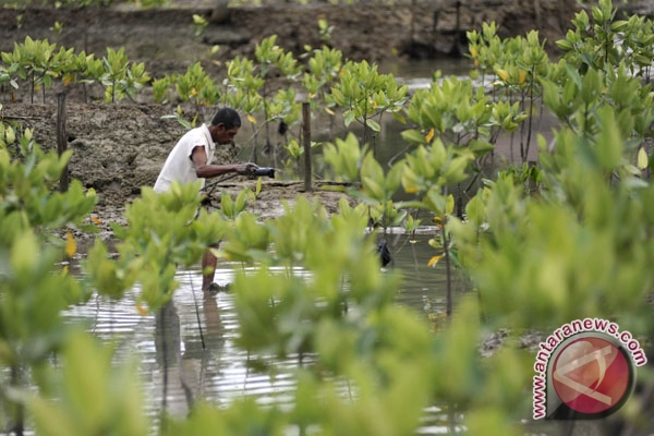E Kalimantan to build  mangrove information, research center