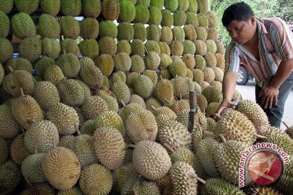 ilustrasi kebun durian(ANTARA/Septianda Perdana)