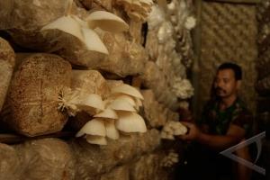 Budidaya jamur tiram di Lebak prospektif