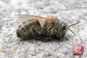 Sebabkan kematian lebah, Eropa mungkin larang pestisida