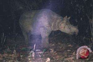 Cikepuh akan jadi habitat kedua badak bercula satu