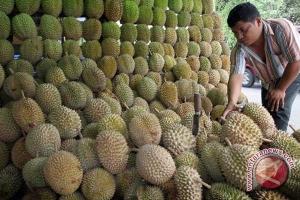 Buah durian banjiri Bandarlampung