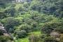 Kotawaringin Timur gandeng UGM garap hutan kota