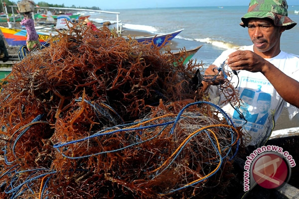 Indonesia to host International Seaweed Symposium