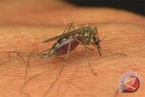 Kamboja catat 25.050 kasus malaria