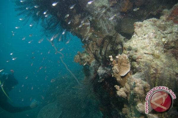 Pemanasan global picu pemutihan karang