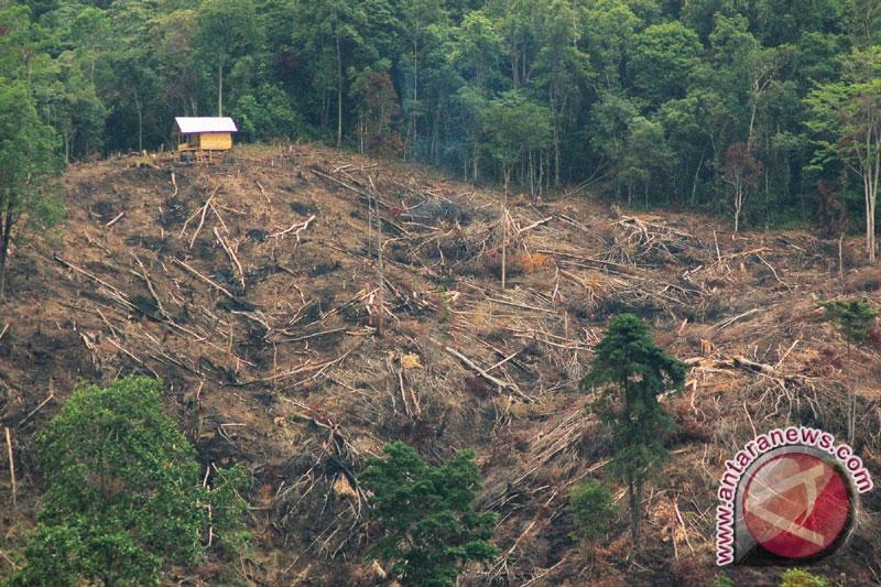 Kerusakan Hutan di NTT Capai 15.163 Hektar