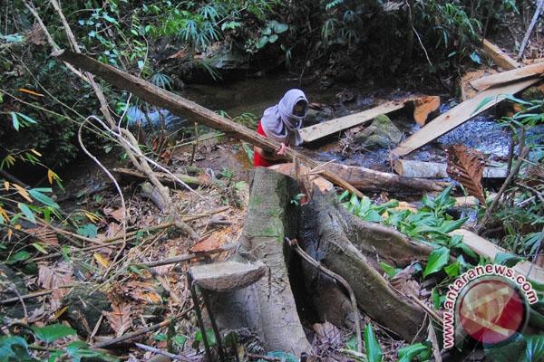 15.163 Hektare Hutan NTT Rusak