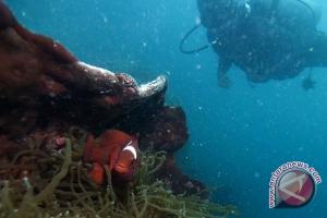 LIPI temukan biota laut  berbahaya di Teluk Ambon