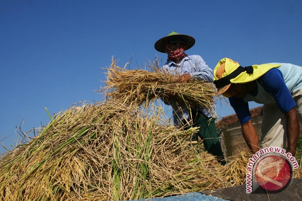 ASEAN must uphold food sovereignty