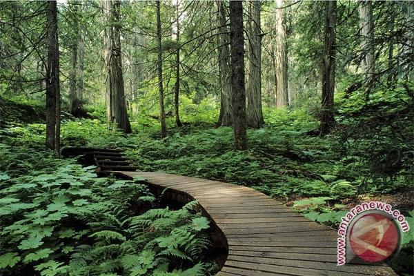 Hutan lebat