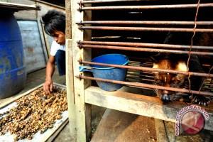 Mencari pangsa pasar kopi luwak Lampung