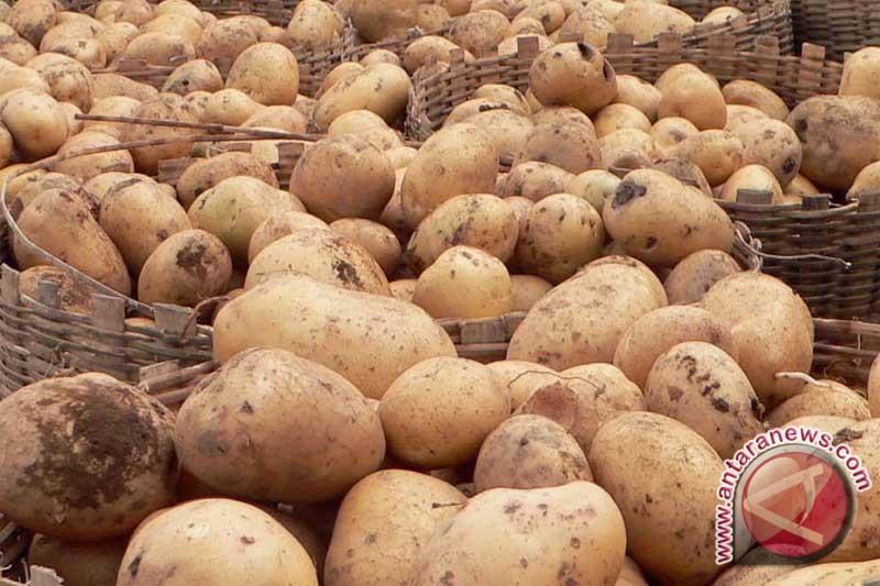 Jus kentang bantu sembuhkan sakit maag