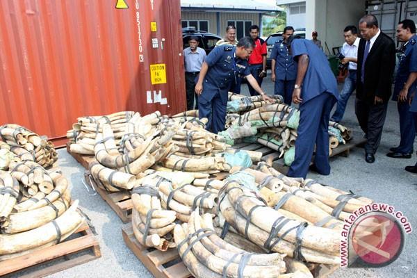 WWF anggap gading gajah sitaan terlalu kecil