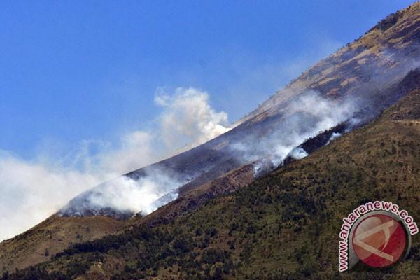 Hutan lereng Sindoro terbakar