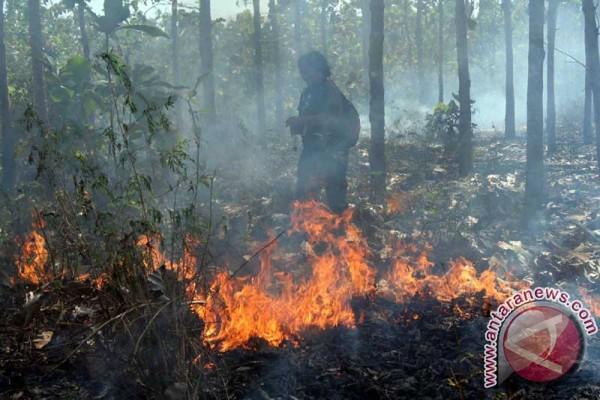 Hutan jati di wilayah KPH Madiun terbakar