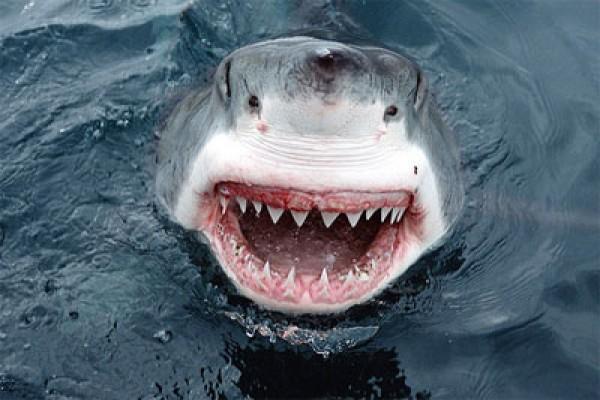 Peselancar Australia tewas diserang hiu