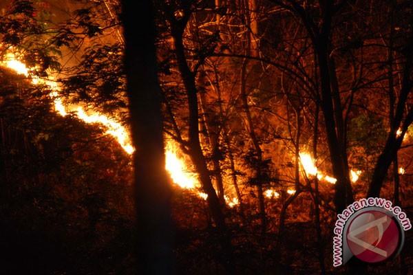 Kebakaran lahan disekitar TNDS kembali terjadi