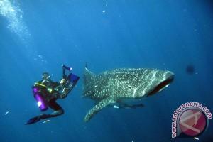 Australia luncurkan baju renang anti hiu