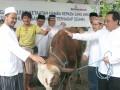 Dirut Bank Mutiara Maryono (kanan) didampingi Direktur Ahmad Fajar (2 kanan), Benny Purnomo (3 kanan), dan Erwin Prasetio (4 kanan) menyerahkan secara simbolis hewan qurban kepada perwakilan warga di sekitar lingkungan kantor Bank Mutiara pada perayaan Idul Adha 1432H, di Jakarta, Minggu (6/11). Penyerahan hewan qurban kepada yatim piatu dan warga sekitar kantor juga sebagai wujud syukur atas pertumbuhan kinerja berkelanjutan Bank Mutiara, yang hingga akhir September 2011 telah memiliki aset sebesar Rp 12,567 triliun, tumbuh 39,23% dari periode tahun lalu senilai Rp 9,026 triliun. (FOTO ANTARA/HO-Feri/nz/11).