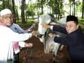 Menhut Zulkifli Hasan (kanan) secara simbolis menyerahkan seekor sapi kepada takmir masjid Nurul Ajam Kementerian Kehutanan Tahrir Fatoni di Jakarta, Minggu (6/11). Menhut pada Hari Raya Idul Adha tersebut meyerahkan delapan ekor sapi dan 19 ekor kambing untuk disembelih dan dibagi-bagikan kepada warga kurang mampu. (FOTO ANTARA/Humas/HO?Spt/11)