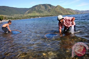 450.000 ikan ditabur di Danau Toba