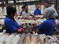 Seorang pekerja (tengah) menjelaskan tetntang proses panen jamur tiram kepada sejumlah peserta pelatihan budidaya jamur tiram di CV. Asa Agro Corporation, Cianjur, Jabar, Minggu (11/12). Usaha budidaya jamur tiram (Pleurotus ostreatus) merupakan salah satu peluang bisnis karena selain teknologi budidayanya mudah dipelajari, sklala usaha fleksibel yang dapat disesuaikan denagn modal , juga permintaan pasar yang terus meningkat. (FOTO ANTARA/Saptono)