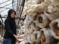 Seorang pekerja memanen jamur tiram (Pleurotus ostreatus) di CV. Asa Agro Corporation, Cianjur, Jabar, Minggu (11/12). Usaha budidaya jamur tiram merupakan salah satu peluang bisnis karena selain teknologi budidayanya mudah dipelajari, sklala usaha fleksibel yang dapat disesuaikan denagn modal , juga permintaan pasar yang terus meningkat. (FOTO ANTARA/Saptono)