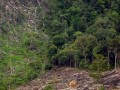 Sebuah alat berat beroperasi di sekitar kawasan hutan lindung yang mengalami kerusakan di perbukitan Nagari Kajai, Kec. Talamau, Kab. Pasaman Barat (Pasbar), Sumbar, Minggu (18/12). Wahana Lingkungan Hidup Indonesia (Walhi) Sumbar, menyatakan saat ini kondisi hutan di Sumbar, sangat memprihatinkan disebabkan tidak adanya kebijakan pengamanan terhadap kawasan yang secara topografi termasuk rentan kerusakan terutama pembabatan dan pembakaran hutan. (FOTO ANTARA/Iggoy el Fitra)