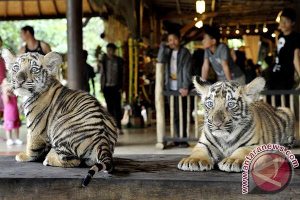 Visitors throng Bali Zoo during Idul Fitr holiday