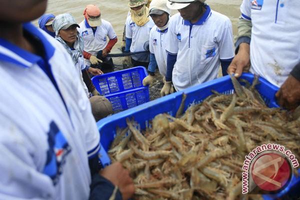 Tambak udang Pantura direvitalisasi tahun ini