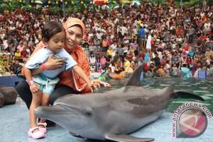 SAR Parangtritis berupaya selamatkan lumba-lumba terdampar
