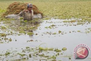 Seratusan hektar sawah Bojonegoro terendam banjir