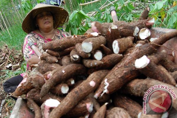 Pemkab Bangka barat: biasakan konsumsi pangan lokal