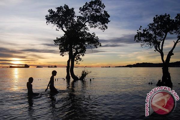Hutan bakau Aceh Tamiang terancam punah