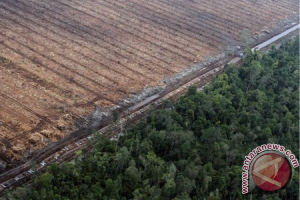 Perpres tata ruang Kalimantan perlu ditinjau ulang