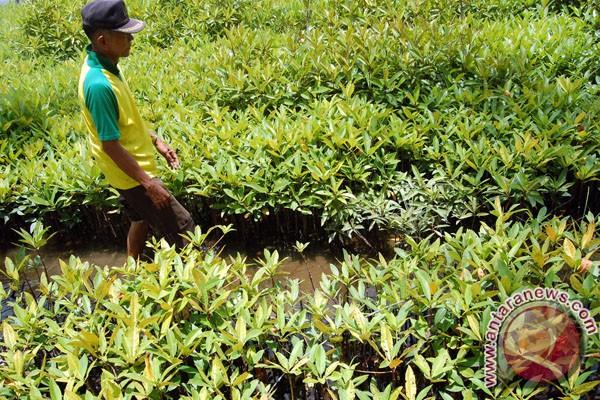 BP Migas tanam 12 juta mangrove